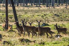 family (Mange J) Tags: 300mm k5ii karlstad magnusjakobsson pentax sverige sweden tamronaf70300mmf456ldmacro vrmland animal bambi cool deer summer tree wild wood nnerud vrmlandsln se