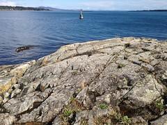2016 09 19 Cattle Point_0030 (Blake Handley) Tags: blake blamar cattlepoint oakbay victoria bc britishcolumbia vancouverisland canada dogs ocean shoreline beardedcollie beardie