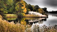 Autumn drama (mpersson60) Tags: sverige sweden solna brunnsviken vatten water hav sea speglingar reflections