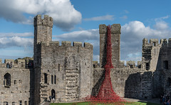 Poppies, Weeping Window - Caernarfon Castle - North Wales (joanjbberry) Tags: weeping window cascade poppies handmade ceramic pouring exhibited caernarfon north wales paulcummins worldwar poppiestour castle red blood tears ancient hertitage cadw welsh stone monument structure