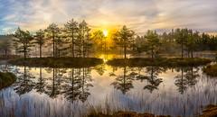 Pine-Indians paddle -kanoe Islands. (fedorlashkov) Tags:            leningrad marsh autumn phototour pine dawn fog sun reflection island halo