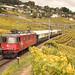 Crossrail Re 430 mit Extrazug im Lavaux