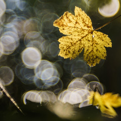 Art of Autumn - Explore # 8 (Late Entry) (*Capture the Moment*) Tags: 2016 autumn backlit bokeh bubblebokeh bubbles dof deutschland f28 frnkischeschweiz germany herbst macro macromondays meyergrlitztrioplan10028 meyeroptikgrlitztrioplan10028 mondays seifenblasenbokeh sonya7m2 sonya7mii sonya7ii bokehlicious