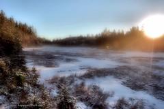 20141206068139 (koppomcolors) Tags: winter forest vinter sweden skog sverige scandinavia värmland varmland koppomcolors
