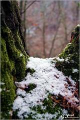LE TEMPS D'UN HIVER (Gilles Poyet photographies) Tags: nature hiver neige arbre soe fort auvergne tronc puydedme autofocus sousbois royat aplusphoto artofimages rememberthatmomentlevel1 lechemindescrtes