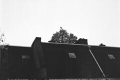 Doka 78 - 31 (Jean Banja) Tags: bird amsterdam bored boring neopan buurt indische