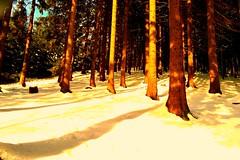 Wildewiese,Sauerland (Germany) (jens_helmecke) Tags: schnee snow nature germany landscape deutschland natur jens landschaft nordrheinwestfalen sauerland wildewiese sundern helmecke