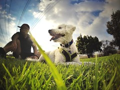 Fun sprint workout with my #bestFriend #dogs #gopro #goprohero3 #parks #exercise #skies #sky #grass (Ceelos23) Tags: sky dogs grass skies exercise parks bestfriend gopro goprohero3