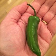 Green chili.