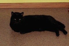psot (Grazka-M-T) Tags: cats nature foto