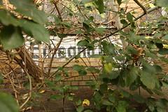 Eingang (n0core) Tags: thringen eingang entrance urbanart ruine ddr spraypaint nordhausen gebude gdr apotheke verlassen urbex abadoned ziegel ndh lostplaces leerstand ostblock rottenplaces
