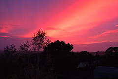 landscape (brz_photography) Tags: pink blue trees sunset red sky sun sunlig