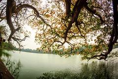Lộc vừng (Duc _ Pham) Tags: landscape fisheye loc ho kiem vung 65mm opteka hồ guom lộc hoàn gươm tháp vừng rùa 1100d kiếm