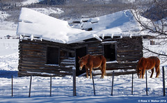 Final Winter (walkerross42) Tags: horses snow log cabin wyoming starvalley pentaxart