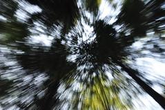 Zoom brust (espositomichele4) Tags: laura tree nature alberi forest zoom path natura monte burst sentiero albero calabria catanzaro foresta contessa zoomburst madama jacurso