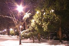 IMGP1915_2_1280 (kopche_eli) Tags: winter snow night sofia bulgaria starburst wintertale