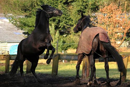 "Pferde im Winter 2015 • <a style=""font-size:0.8em;"" href=""http://www.flickr.com/photos/69570948@N04/16332207008/"" target=""_blank"">Auf Flickr ansehen</a>"