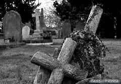 Cross WM (Jesse Davies) Tags: boy beautiful cemetery grave graveyard rose angel cross sweet praying dreams