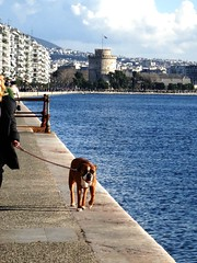 model (Uncle Fe) Tags: dog sun animals walk greece macedonia thessaloniki timeless makedonia lefkospirgos