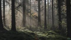 Tetenhusen 029 (Hauke Lass) Tags: fog deutschland nebel lass moor hauke wald bume skoven schleswigholstein geest naturpark naturschutzgebiet sorge halbinsel jtland moren ochsenweg kreisrendsburgeckernfrde binnendnen traeer tetenhusen lumixgh bevarelse europischerfernwanderweg sorgetal haukelass kimbrische naturparkhttenerberge europisklangdistancevanderesti