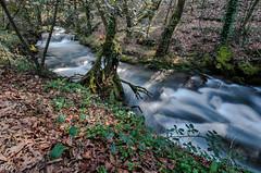 Ruta da pedra e auga (Perurena) Tags: longexposure trees water leaves rio forest river hojas agua arboles bosque pontevedra largaexposicion ribadumia efectoseda