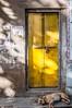 Sleeping on the job... (Syahrel Azha Hashim) Tags: door travel light shadow vacation dog india holiday detail texture 35mm prime nikon colorful dof getaway culture naturallight handheld shallow pushkar pushkarlake d300s syahrel