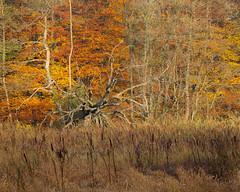 Hstfrger Hckeberga (Gustaf_E) Tags: forest skne oak woods skog ek sverige hst hckeberga quercusrobur