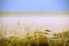 Etosha National Park, Namibia (Global Environment Facility (GEF)) Tags: namibia etosha wildlife protectedarea photobypatriziacoccagef biodiversity conservation desert semiarid nature
