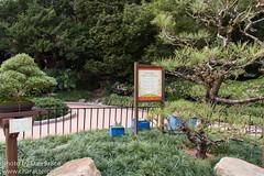 Japanese Mini Garden