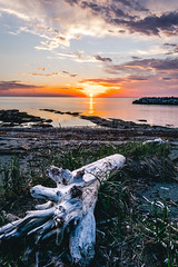 The Tree (Fred_514) Tags: quebec canada sony a6000 sigma sigmaart sigma19mm sonya6000 bicnationalpark parcnationaldubic capchat gaspesie basstlaurent gaspesiejetaime quebecoriginal landscapes nature amazing wow inexplore fred514