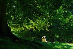 Summer is here at last. (daveduke) Tags: summer sunbathing sonya6000 sonyilcea6000 sony70300mmfegoss