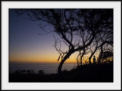 beacon (Andrew C Wallace) Tags: ocean trees sunset sea lighthouse colours dusk horizon australia victoria beacon m43 capeschanck morningtonpeninsulanationalpark microfourthirds olympusomdem5 olympus17mmf18