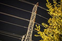 20160710-DSC09314.jpg (mcreedonmcvean) Tags: 20160709 starbucksonparmer powerlines tree