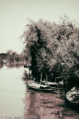 Otro lugar, otro horario, otro... #bnw #b&w #byn #noir #black #blackandwhite #bnw_life #albufera #parque #natural #nature #naturelovers #reflections (Ivalethia) Tags: bnwlife blackandwhite noir natural b nature parque naturelovers black reflections albufera byn bnw