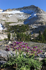 2016_07_05_3631-PS (DA Edwards) Tags: northern california eldorado national forest desolation wilderness shangrila color mountains sierra nevada lake light wildflowers sunset sunrise tent snow da edwards photography summer 2016