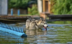 heat, fountain, cool (rgbshot72) Tags: water animals dog animal green dogs fountain pet wildlife pets heat cool