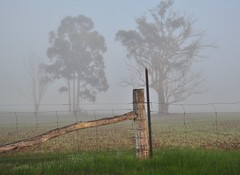 Foggy Friday farm fence (holly hop) Tags: fog fences winter outdoors emu dew cold foggy australia centralvictoria farm farmfence fencefriday hff abctvweather