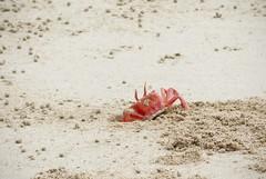 Hidding spot (LynxDaemon) Tags: crab beach sand orange hidding funny