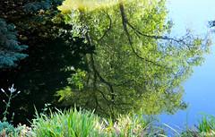 Un reflejo, simplemente (Franco DAlbao) Tags: francodalbao dalbao fuji reflejos reflections estanque pond agua water rboles trees verano summer espejo mirror