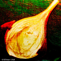 "onion face (edited ""upload"") (R-Pe) Tags: rpe www1764org 1764org 1764 camera canon nikon sony ausstellung show exhibition gift geschenk bild pic picture foto photo photographie fotografie rbi peter abstract melancholie aufnahme"