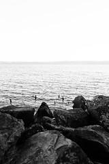 Once upon a time, there was a pier ... (lorenzoviolone) Tags: agfascala200 bw blackwhite blackandwhite finepix fujix100s fujifilm fujifilmx100s goldenhour monochrome rocks vsco vscofilm x100s cliff cliffside hills horizononthewater lake lakeside mirrorless sticks streetphoto streetphotobw streetphotography walk:trevignano=07172016 trevignanoromano lazio italy