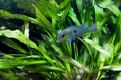 FujiXE2-0153 (QTTheory) Tags: cvg cincinnati ohio newport aquarium newportaquarium fujifilm fujinon xe2 xf 1855mmf284rlmois