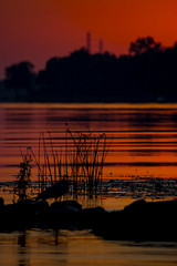 Red Dawn (runningman1958) Tags: 365 365dayproject nikon d7200 nikond7200 petrieisland petrie morning dawn red reddawn silhouette bird seagull