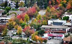 Fall Foliage in Rainier Valley 036 (longbachnguyen) Tags: seattle beaconhill georgetown washington fallfoliage autumn fallcolors landscape landscapephotography aerial aerialphotography aerialphotographer