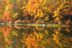 Silver Mine Lake Foliage () Tags: wallpapers colorefex nikoncapturenx nikond90 newyork harrimanstatepark silverminelake sevenlakesdrive foliage autumn fall