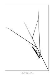 Chinoiserie naturelle (Gil Gautier @GilGPhotographie) Tags: gilgphotographie gilgautier nikon d4s 180mm macro sigma mante mantis