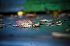 Blatt (nicoheinrich86) Tags: bokeh blatt dof details pov pflanze leaf herbst autumn nikon d5000
