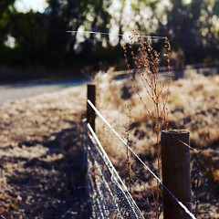 53/365 (fotovivo / peevish me) Tags: 365 postaphotoaday square fence wire golden dof fotovivo