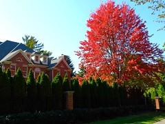 Ablaze (e r j k . a m e r j k a) Tags: pennsylvania allegheny edgeworth sewickley autumn fall tree upperohiovalley pa65 i79pa house abode explore