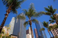 Shutterstock - LA Pershing Sq palm trees (Context Travel) Tags: los angeles architecture pershing square palm tree shutterstock